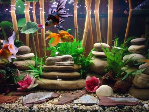 Vasca da 220 litri acquario di pesci rossi in stile zen for Vasca x pesci rossi